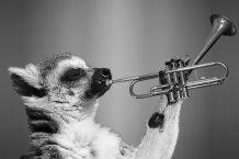la-musica-amansa-a-las-fieras-juan-nieto